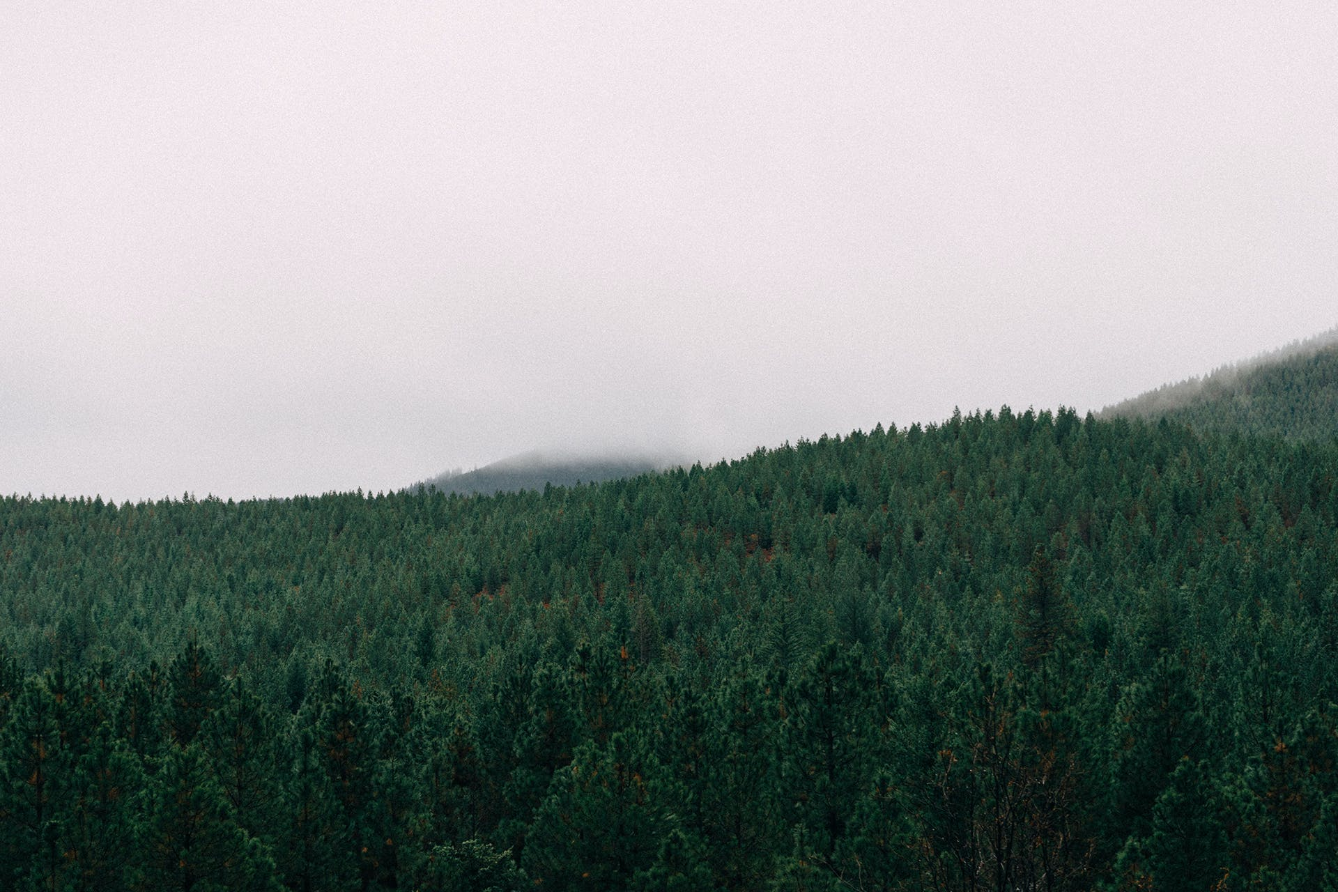 Free stock photo of forest, trees, whitespace