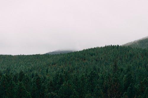Ilmainen kuvapankkikuva tunnisteilla metsä, puut, tyhjä tila