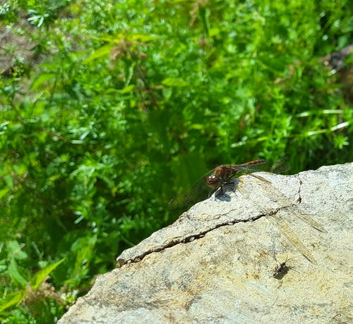 Free stock photo of bug, dragonfly, green