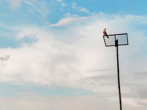 Безкоштовне стокове фото на тему «блакитне небо, високий, відпочинок»