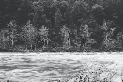 冬, 木, 森林, 氷の無料の写真素材