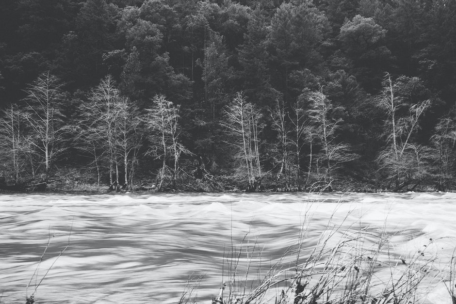 black-and-white, forest, ice