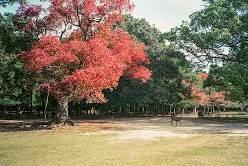 Braune Holzbank Auf Grünem Grasfeld Nahe Roten Laubbäumen