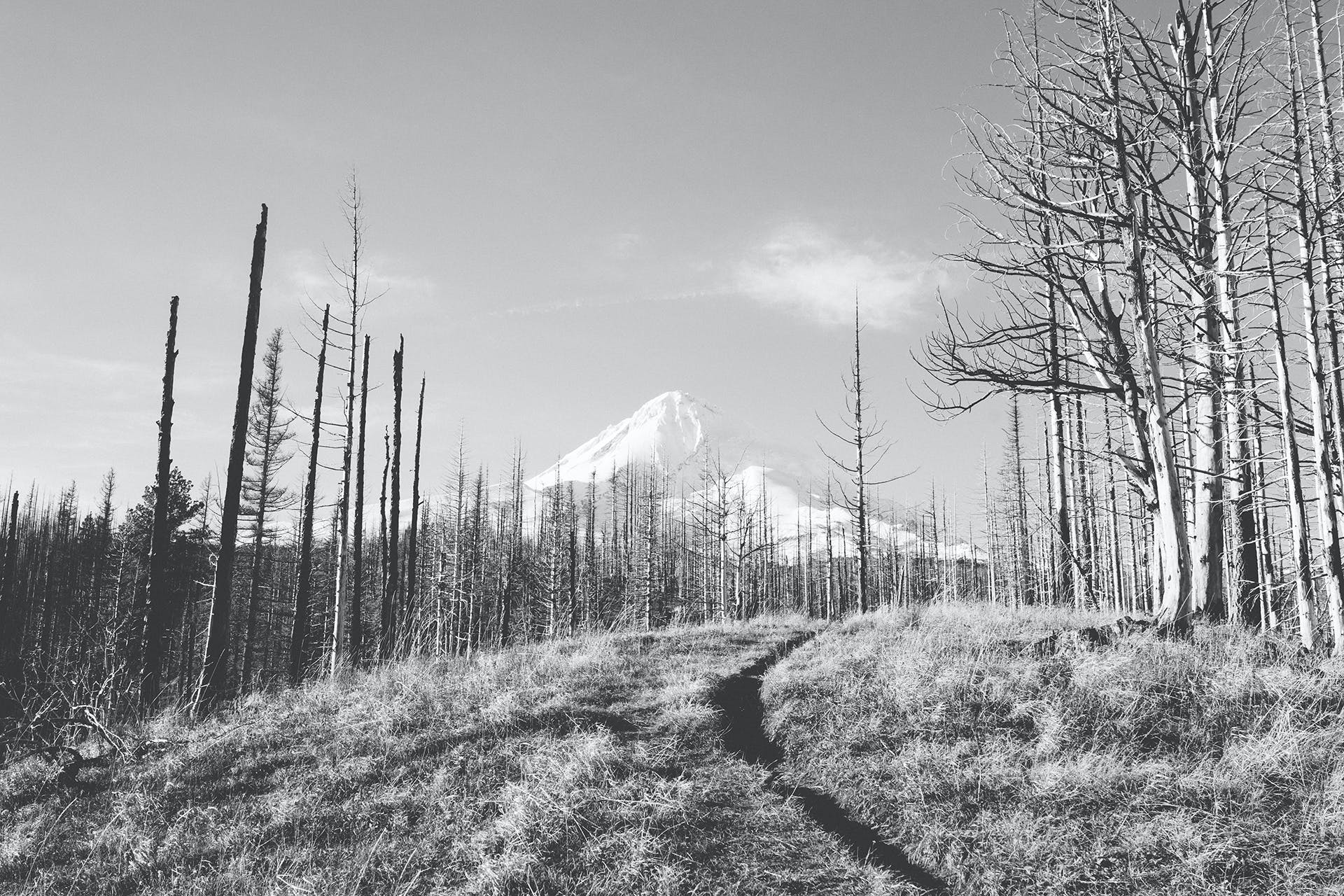 Grayscale Photo of Bare Trees Near Mountain