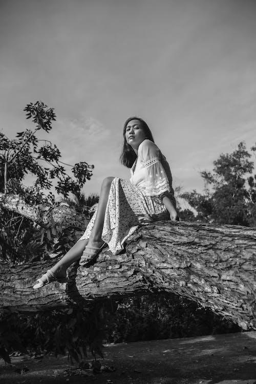 Fotos de stock gratuitas de adulto, al aire libre, árbol