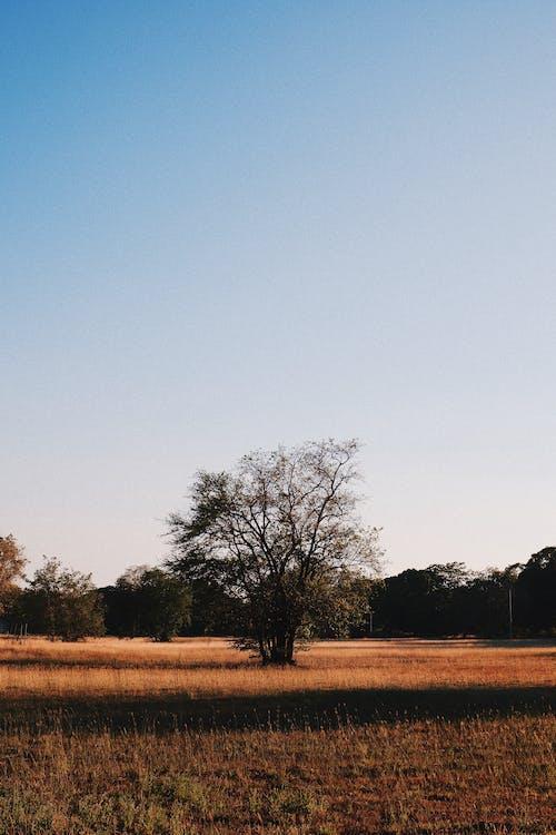 Fotos de stock gratuitas de al aire libre, árbol, armonía