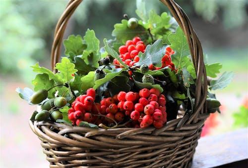 Close-Up Shot of a Fruit Basket of Organic Berries