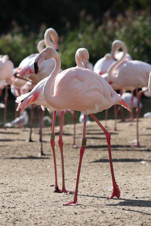 Flock of flamingos walking on shore