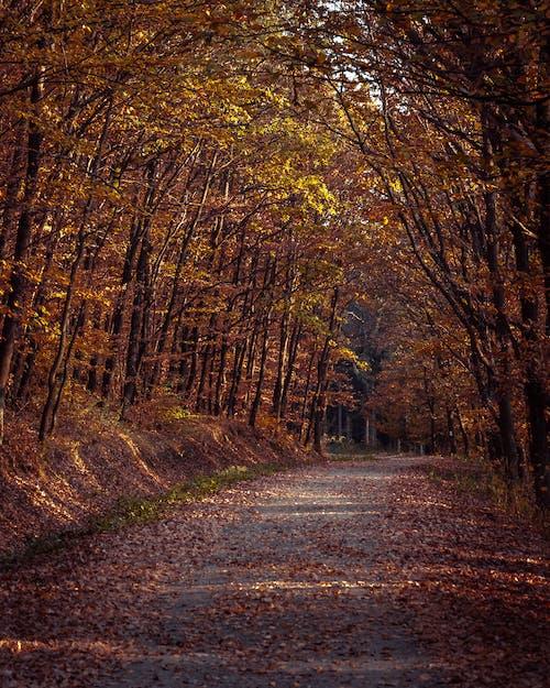 Foto profissional grátis de ao ar livre, árvores, caminho