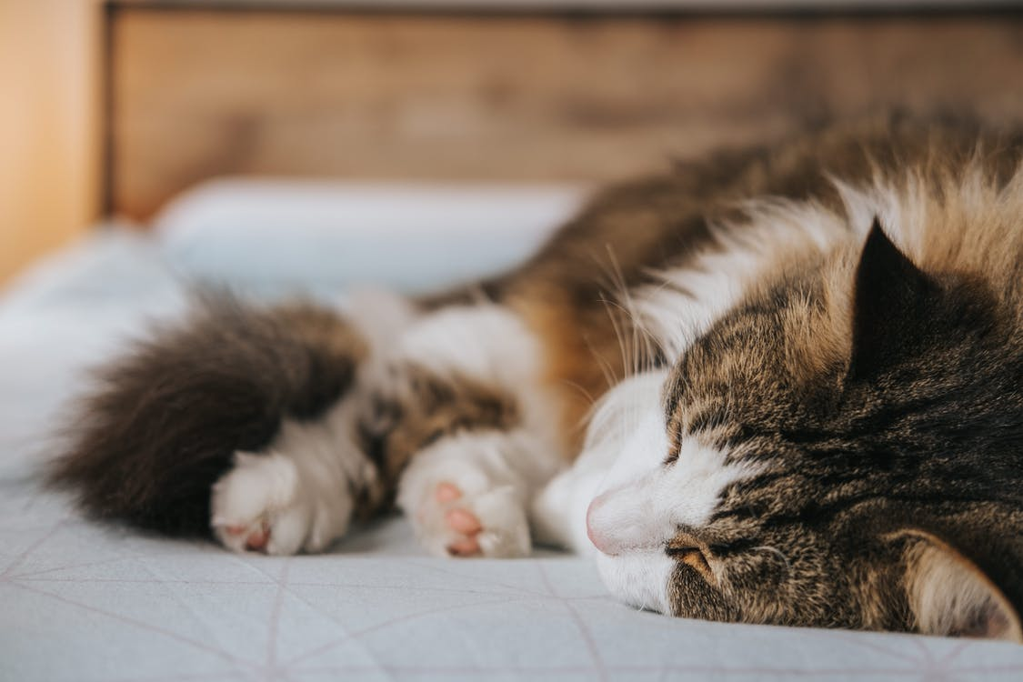 Adorable fluffy cat napping on cozy bed in house