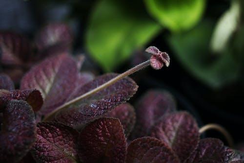 Kostnadsfri bild av botanisk trädgård, löv, rödbrun, trädgård