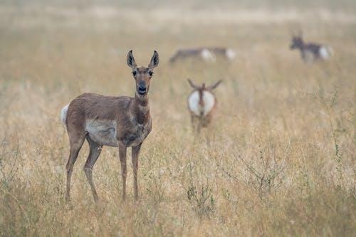 一群動物, 乾燥, 乾的 的 免費圖庫相片