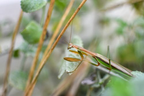 Camouflage grasshopper with long horns sitting on green plant stem in lush forest