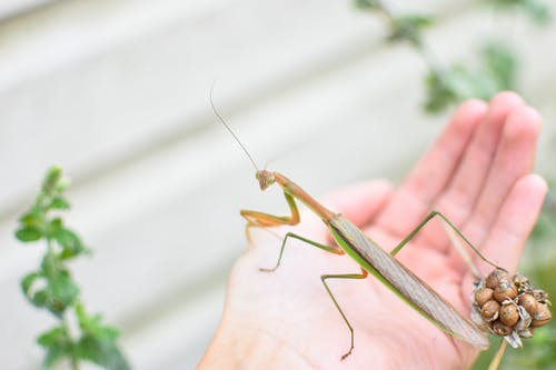 Crop anonymous person with huge insect with long legs in daylight in selective focus