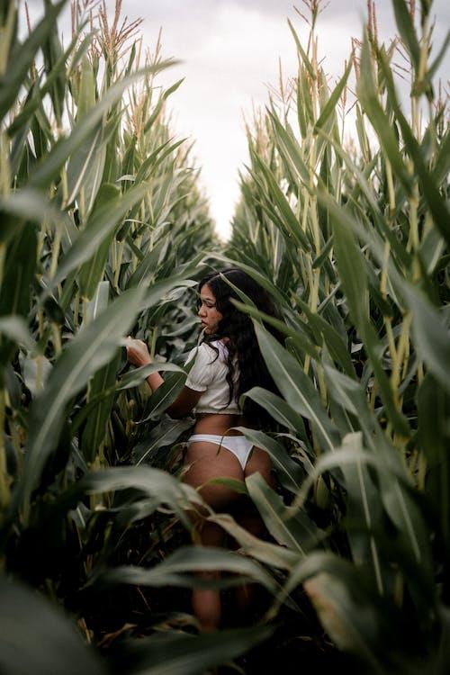 Ảnh lưu trữ miễn phí về cánh đồng, Cánh đồng ngô, đàn bà