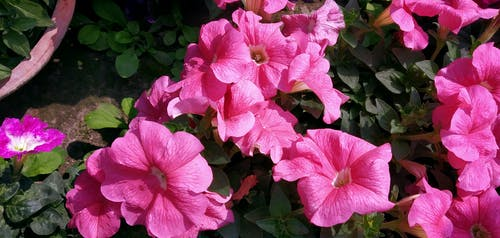 Free stock photo of balcony garden, blomming, blossom