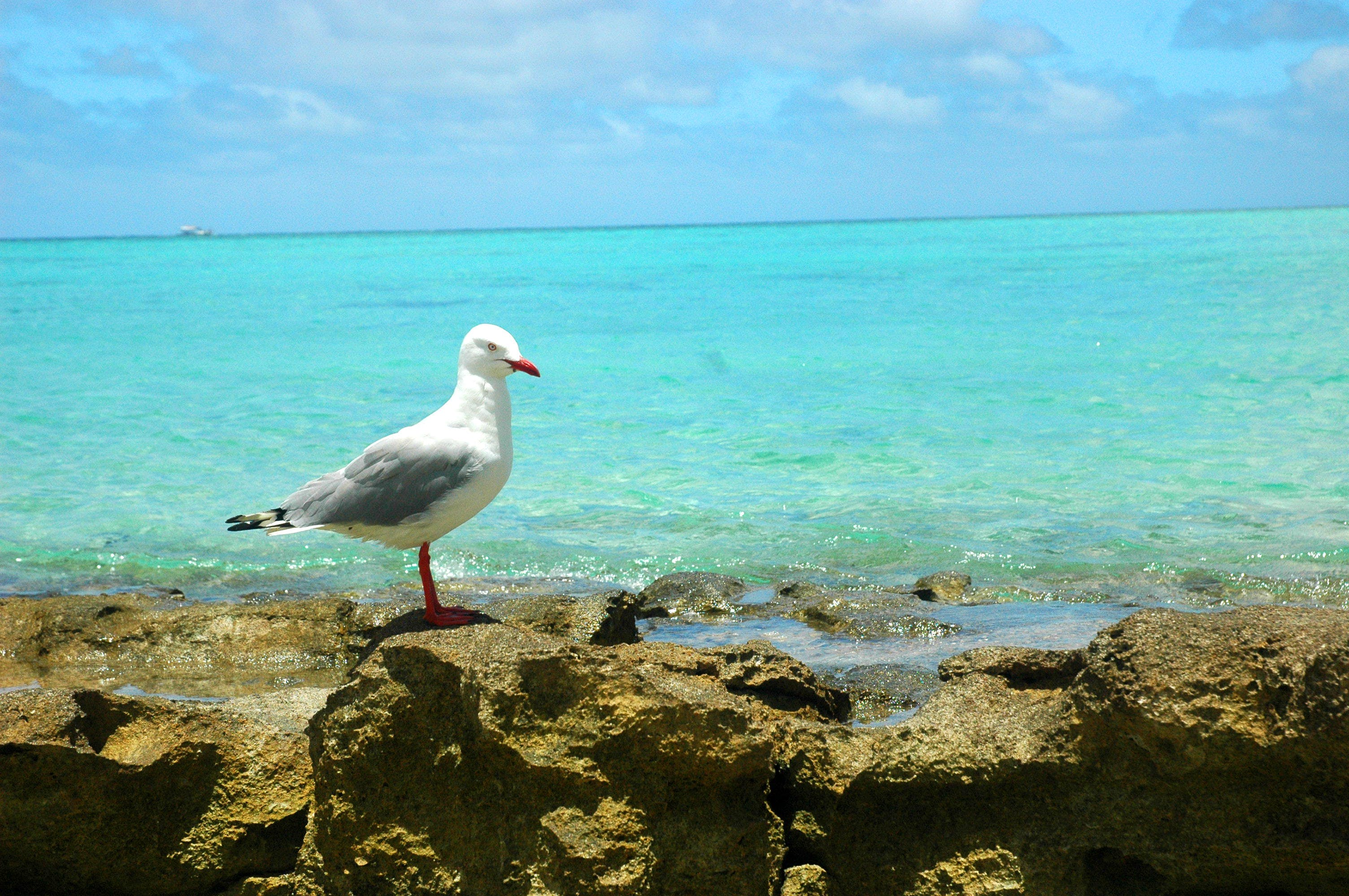 Free stock photo of animal, australia, beach, blue