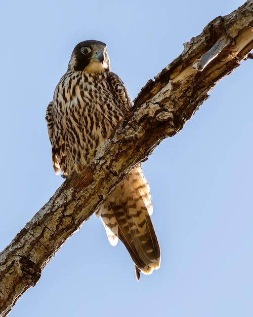 動物, 戶外, 機翼, 猛禽 的 免費圖庫相片