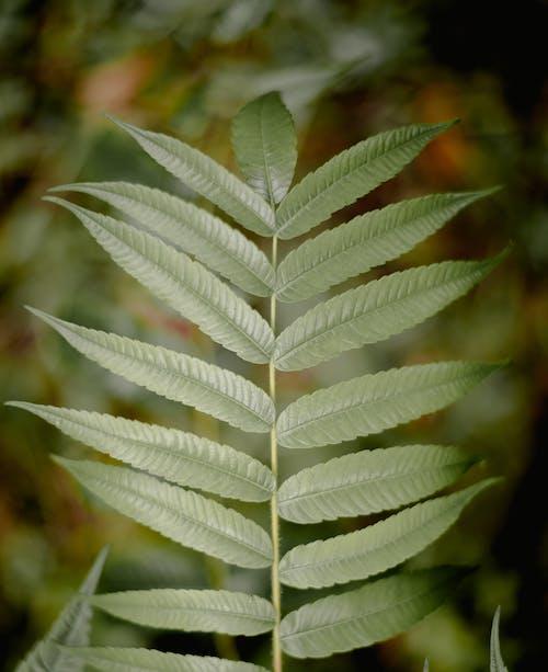 Безкоштовне стокове фото на тему «гілка з листям, дерево, дощ, зростання»