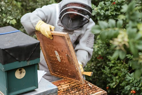 Crop man harvesting honey in countryside area