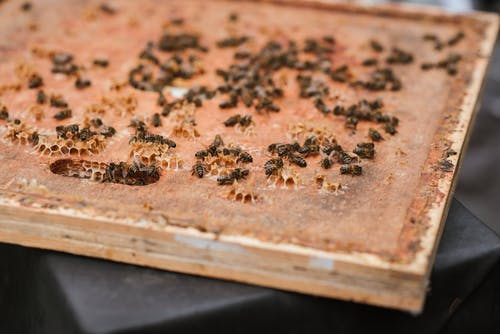 Wooden honeycomb with fresh honey and lots of bees on table in apiary