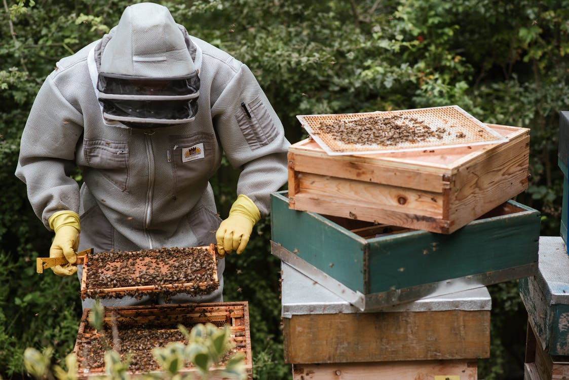 Unrecognizable beekeeper harvesting honey in backyard
