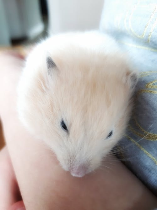 Free stock photo of animal, cute, cute animal