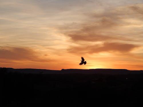 Bird flying over sunset sky