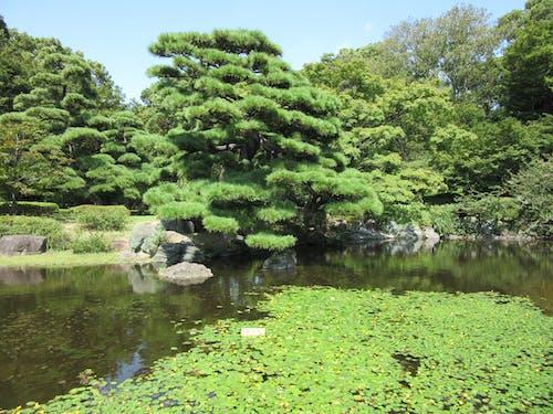日文, 日本人, 日本的, 樹木 的 免費圖庫相片