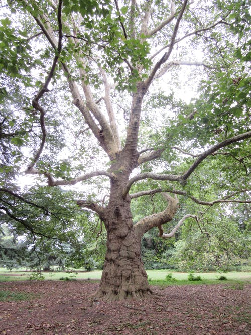 天性, 性質, 樹, 自然 的 免費圖庫相片