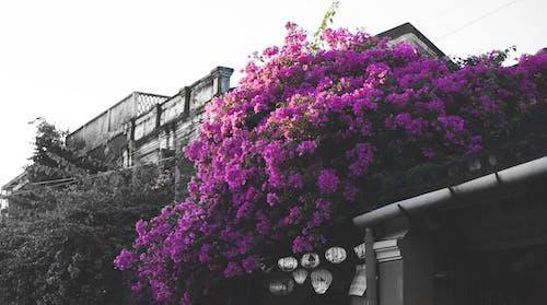 Imagine de stoc gratuită din floare