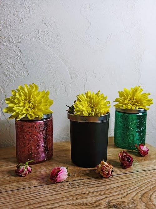 ahşap, bitki koleksiyonu, bitki örtüsü içeren Ücretsiz stok fotoğraf
