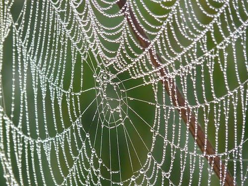 Web, 濕, 露, 露珠 的 免费素材照片