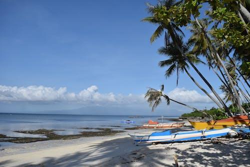 Boats on sandy seashore near tropical trees on sunny day