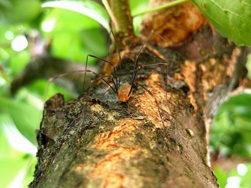 Kostnadsfri bild av insekt, långa ben, makro, närbild
