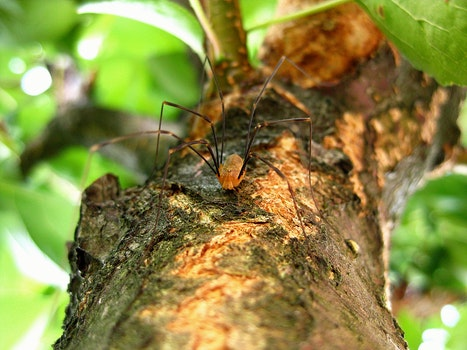 Brown Spider on a Wooden Tree Branch