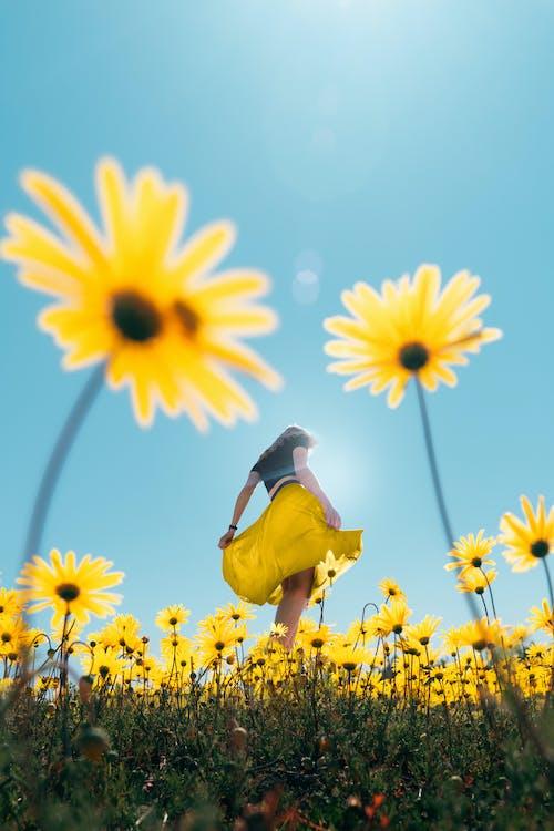 Yellow and Black Bird on Yellow Flower