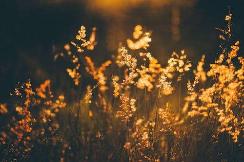 Field plants in meadow in sunlight