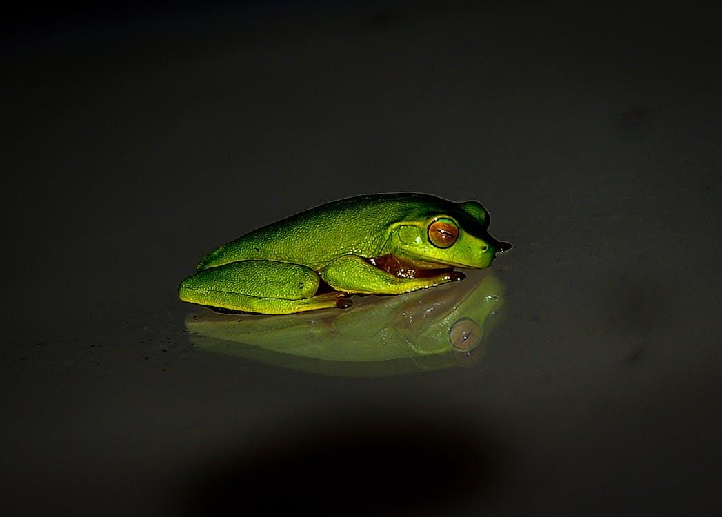anfibio, animal, fotografía de animales