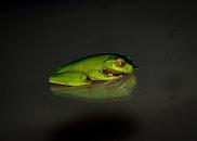 animal, green, reflection