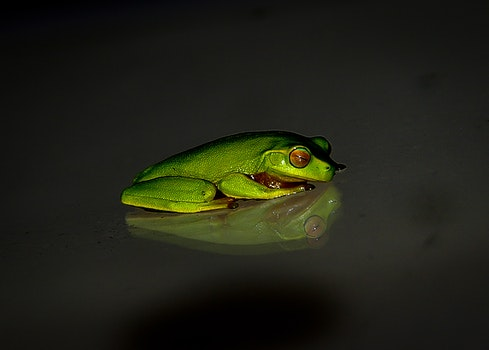 Green Frog on Black Surface