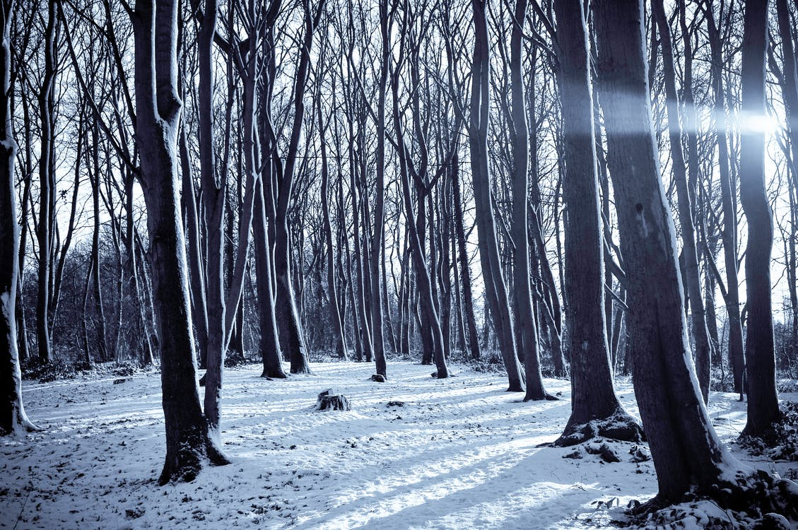 Landscape Photography of Naked Trees