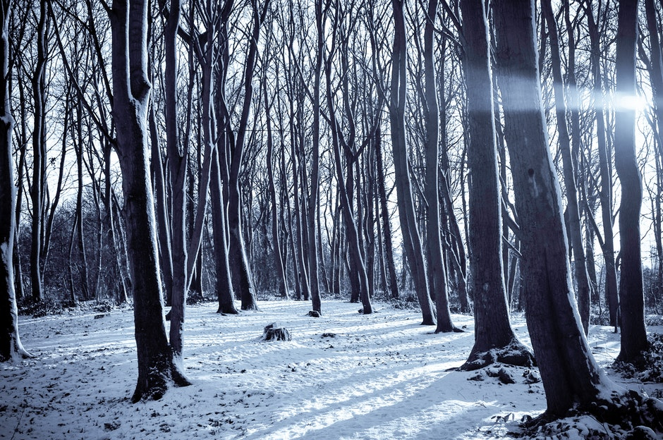 cold, forest, nature