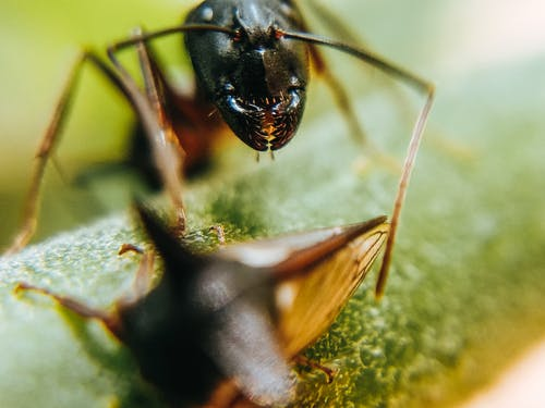 Macro Photography of an Ant and a Thorn Bug