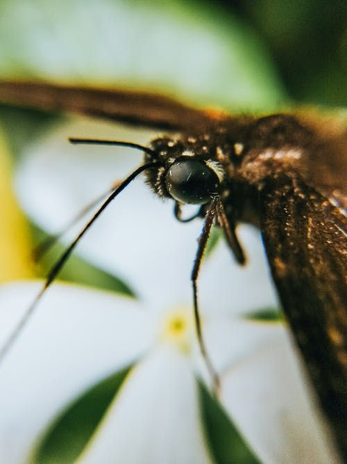 Macro Photography of a Moth Perched on a Flower