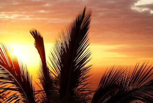 Бесплатное стоковое фото с дерево, закат, лето, небо