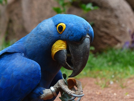 Blue and Yellow Furred Bird