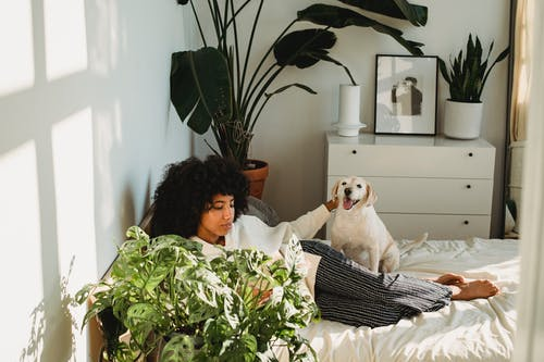 From above of young ethnic female with Afro hair stroking obedient dog while lying on bed and reading interesting novel during weekend at home