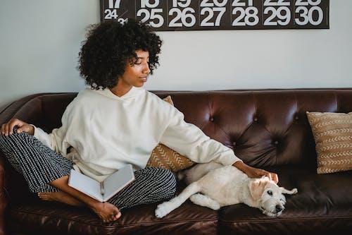 Стильная молодая этническая леди читает записки и гладит симпатичную собаку на диване