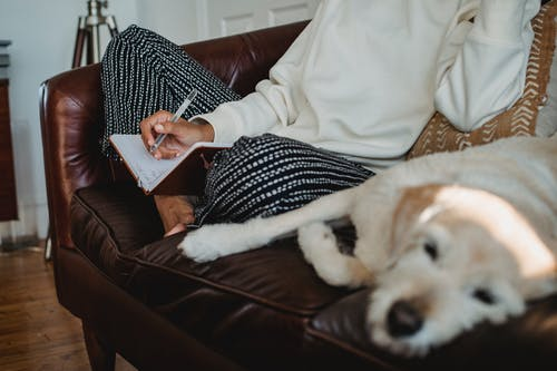 High angle of crop unrecognizable barefooted female freelancer writing in notebook while sitting on soft couch near sleeping dog